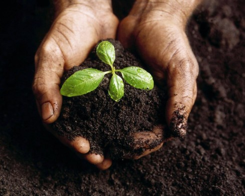 baby_plant.28104733-1024x819